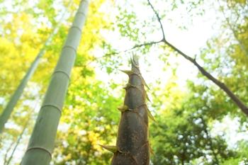 竹の節と成長のイメージ
