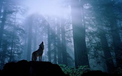 ネットビジネスで起業するイメージ、孤高のオオカミ
