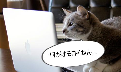 YouTuberを見て何が面白いかわからない猫